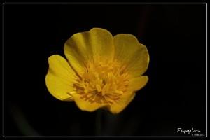 IMG_13249-bis-cadre4.jpg